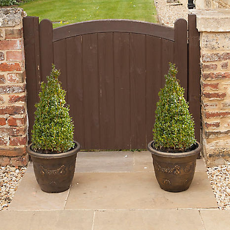 pair of box topiary buxus sempervirens pyramid tall potted plants - Tall Potted Plants